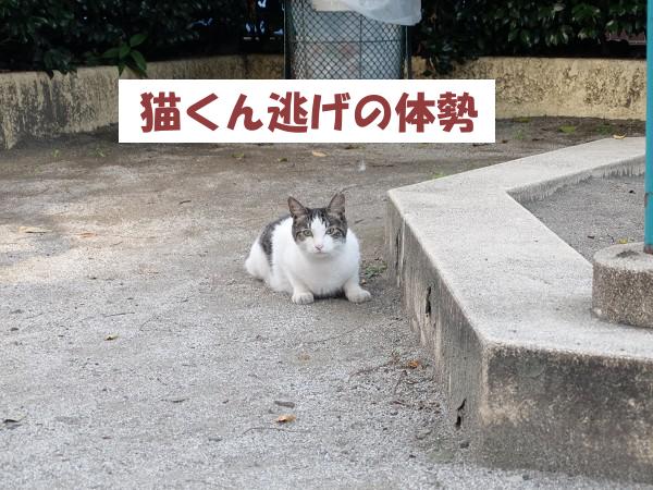 猫くん逃げの体勢