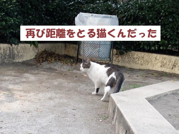 再び距離をとる猫くん