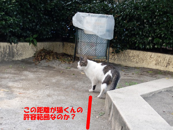 この距離が猫くんの許容範囲らしい