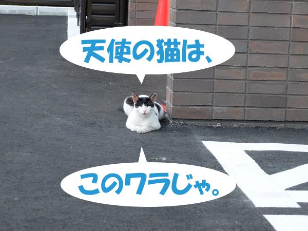 天使の猫は、このワラじゃ。