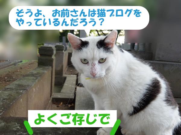 お前さんは猫ブログをやっているんだろう