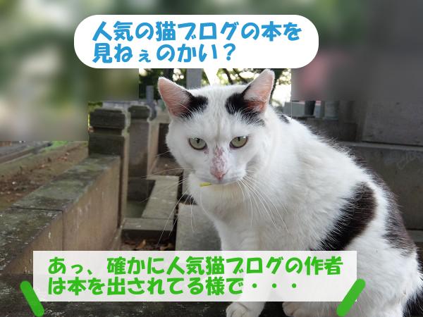 人気の猫ブログの本を見ねぇのかい
