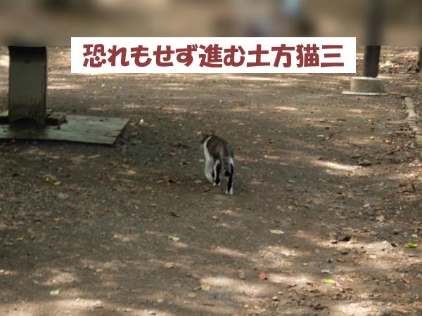恐れもせず進む土方猫三