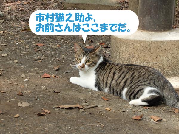 市村猫之助よ、お前さんはここまでだ