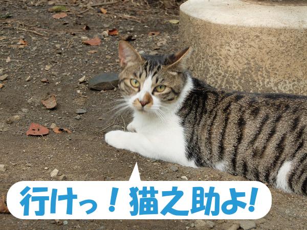 行け!猫之助よ