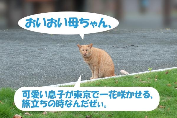 可愛い息子が東京で一花咲かせる、旅立ちの時なんだぜぃ
