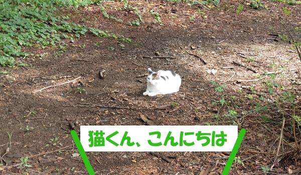 猫くん、こんにちは