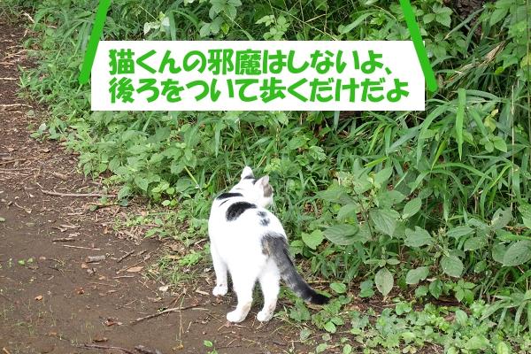 猫くんの邪魔はしないよ、後ろをついて歩くだけだよ