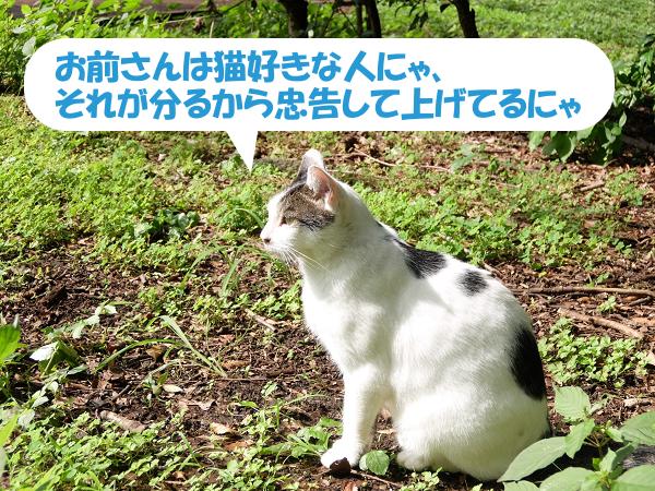 お前さんは猫好きな人にゃそれが分るから忠告して上げてるにゃ