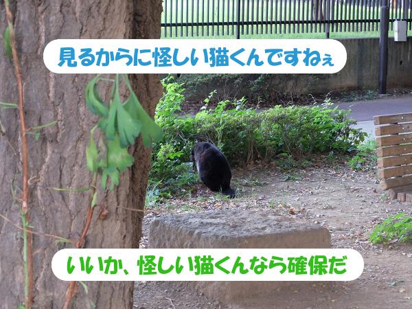見るからに怪しい猫くんですねぇ、いいか、怪しい猫くんなら確保だ。