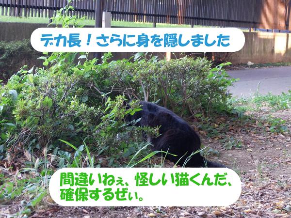 デカ長!さらに身を隠しました。間違いねぇ、怪しい猫くんだ、確保するぜぃ。