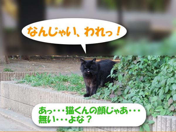あっ・・・猫くんの顔じゃあ・・・無い・・・よな?