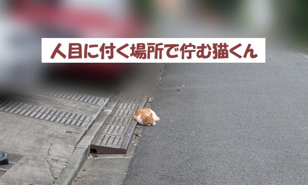 人目に付く場所で佇む猫くん
