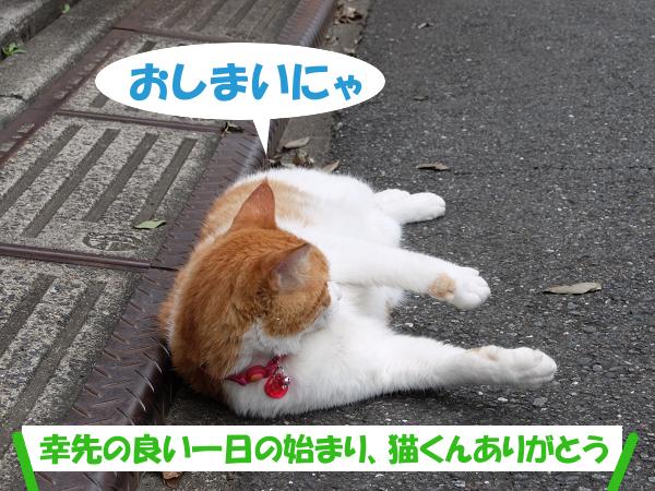 おしまいにゃ。幸先の良い一日の始まり、猫くんありがとう