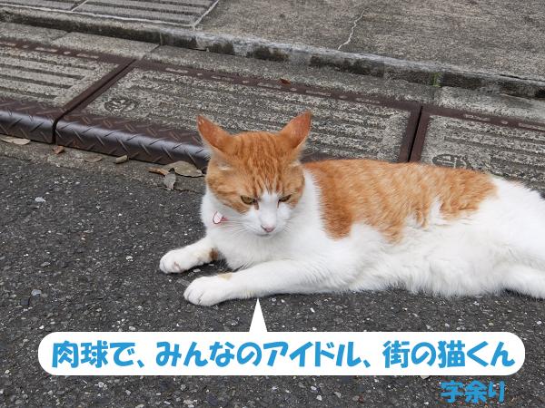 肉球で、みんなのアイドル、街の猫くん