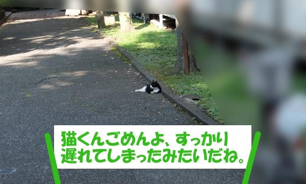 猫くんごめんよ、遅れてしまった