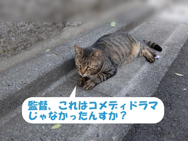 mc_140730d.jpg