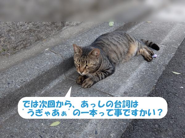 mc_140730e.jpg