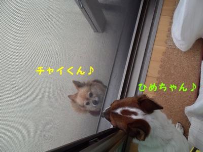 チャイとひめちゃん①