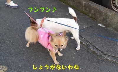 チャイとひめちゃん③