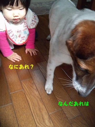 201405220137063e8.jpg