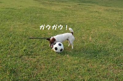 サッカーボールとチャイ②20140615
