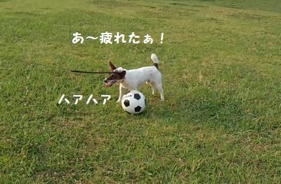 サッカーボールとチャイ③20140615
