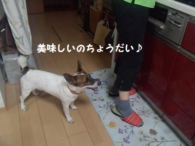 20140703(実家①-3)