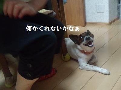 20140703(実家①-4)