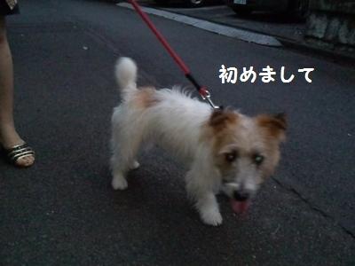 201407実家 チャイ散歩⑤