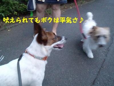 201407実家 チャイ散歩⑧