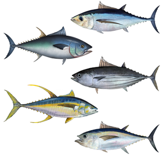 Tuna_assortment.png