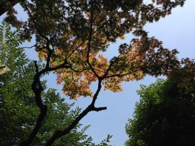 IMG_5222shizuoka.jpg