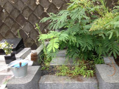 IMG_5470itsukaichi.jpg