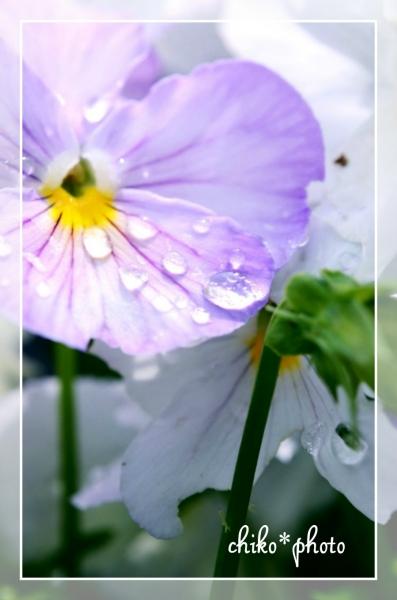 photo-447 雨あがり2