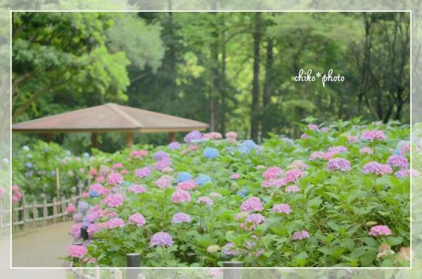 photo-471 紫陽花のある風景