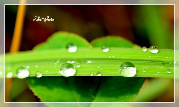 photo-501 雨粒