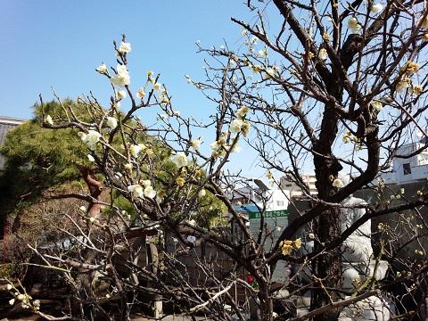 城東動物霊園20140316