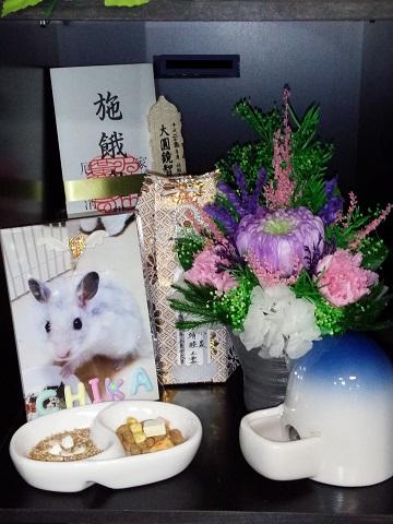 チカちゃん霊座(城東動物霊園)20140316