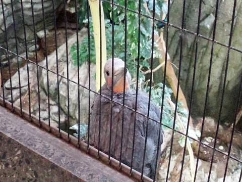 上野動物園20140330