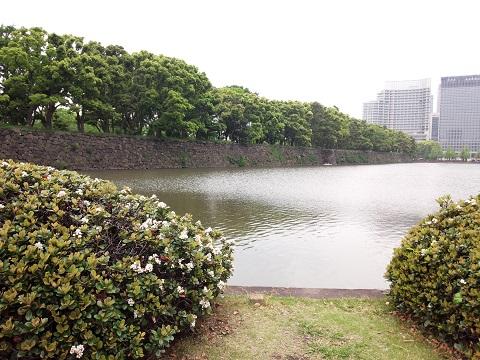 皇居東御苑20140505