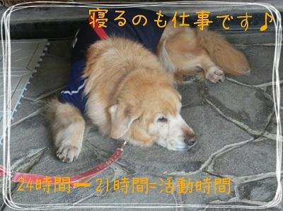 tateyama1-3.jpg