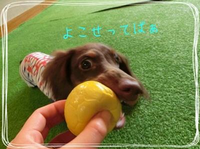 tateyama2-4.jpg