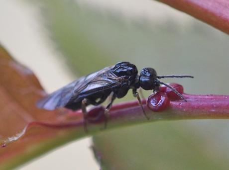 ハチ吸蜜2