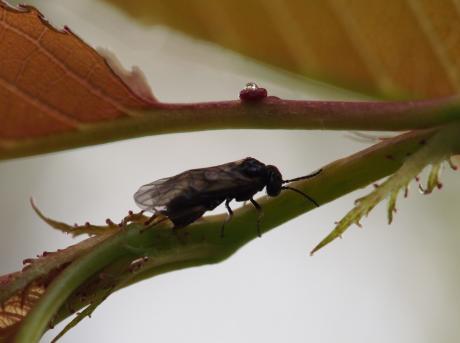ハチと花外蜜腺
