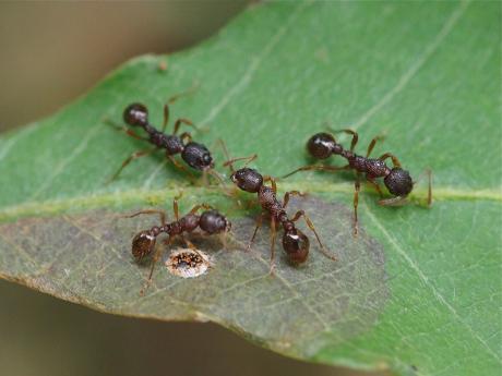 アリ&ダンダラチビタマムシ産卵痕