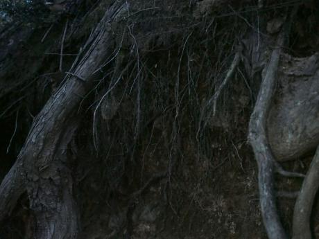 スジボソコシブトハナバチ6