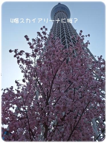 スカイツリーと桜?