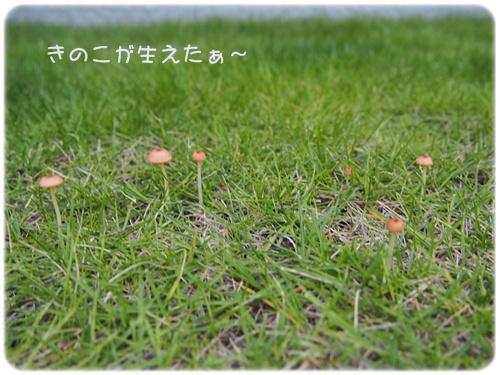 芝生にきのこ