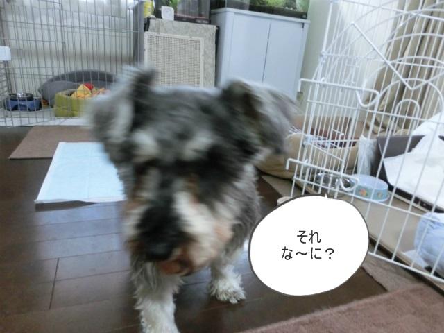 2014,03,07 シンちゃん来訪の巻 050